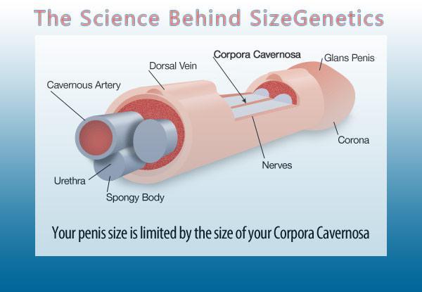 Sizegenetics Penis Enlargement