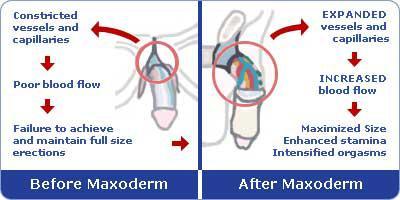 Maxoderm Penis Cream